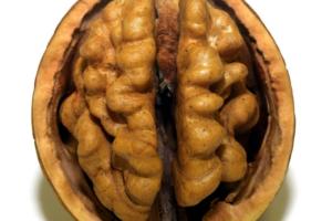 Immagine descrittiva dei cibi giusti per il cervello