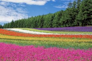 Immagine di un campo colorato che simboleggia la creatività